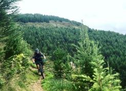 Tom cresting a high corner at Afan Forest